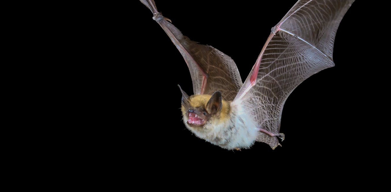 Greensboro Bat Removal